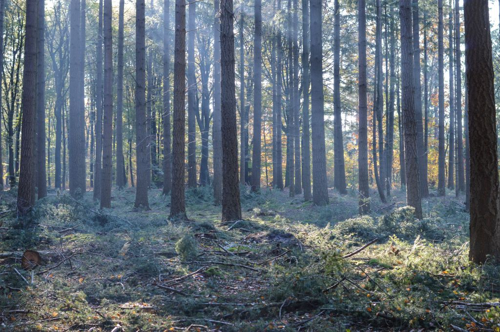 Prattenburgse bossen
