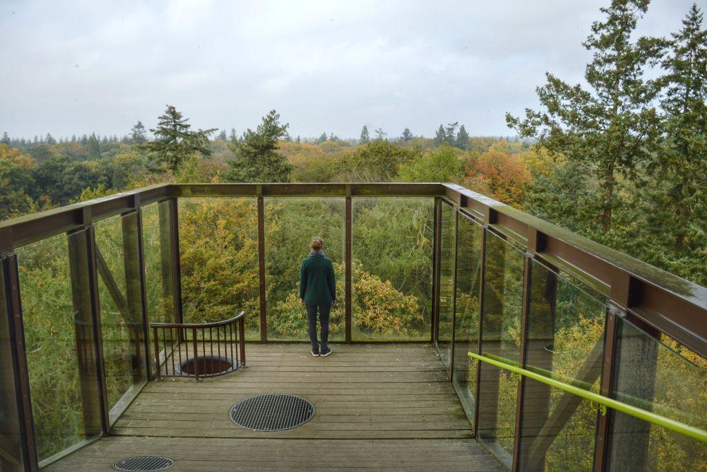 Mooie uitzicht op de Veluwe vanaf de Bostoren in Putten