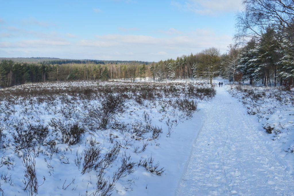 De Elsterkop in de sneeuw