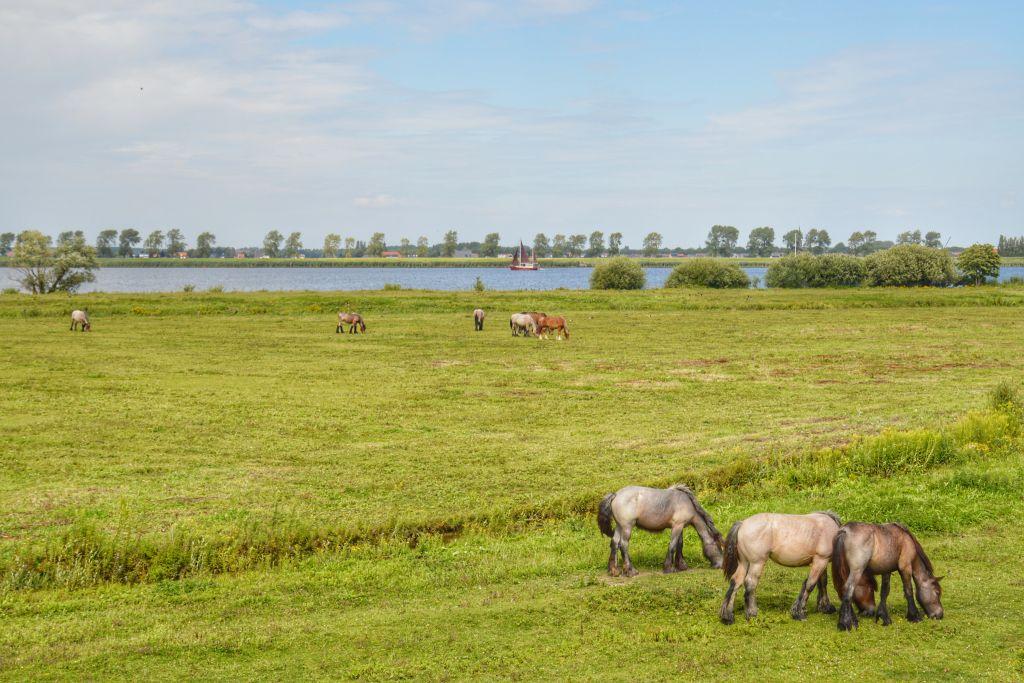 Paarden op Tiengemeten