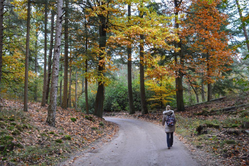 Leuvenumse bossen - veluwe