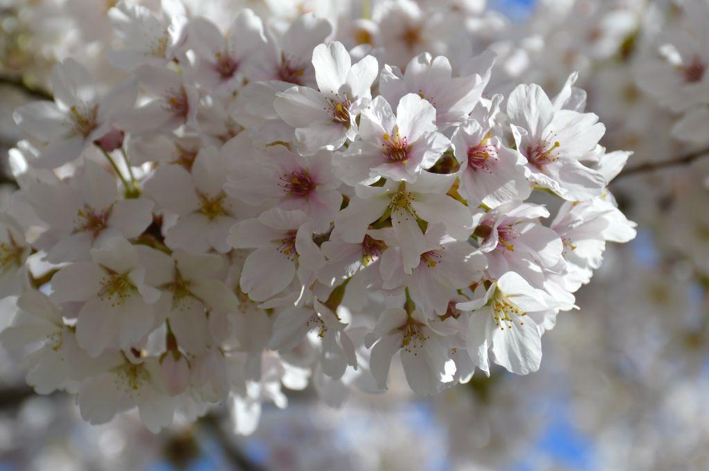 Bloesems in het voorjaar