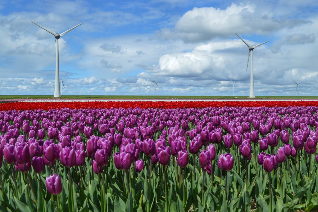Noordoostpolder Flevoland
