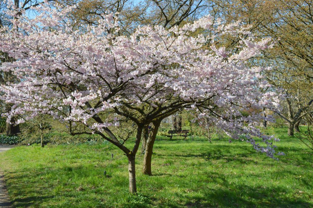 Arboretum Belmonte Wageningen