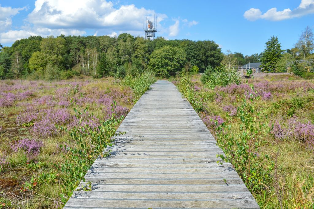 Mooie heidevelden Utrechtse Heuvelrug: Vliegbasis Soesterberg