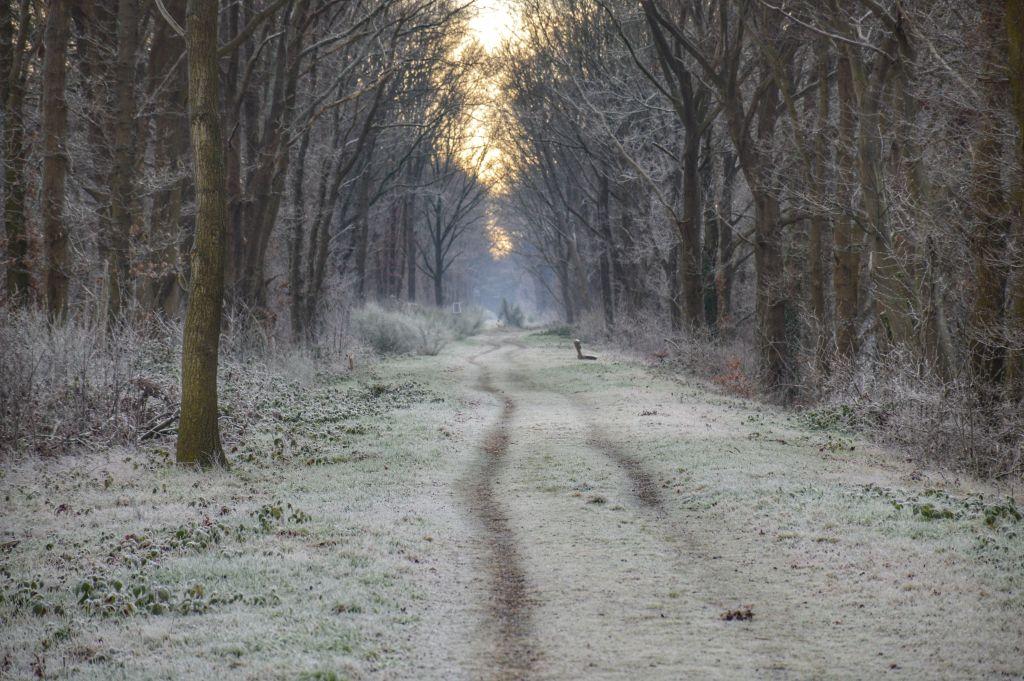 Klompenpaden Utrecht: Woudenberg