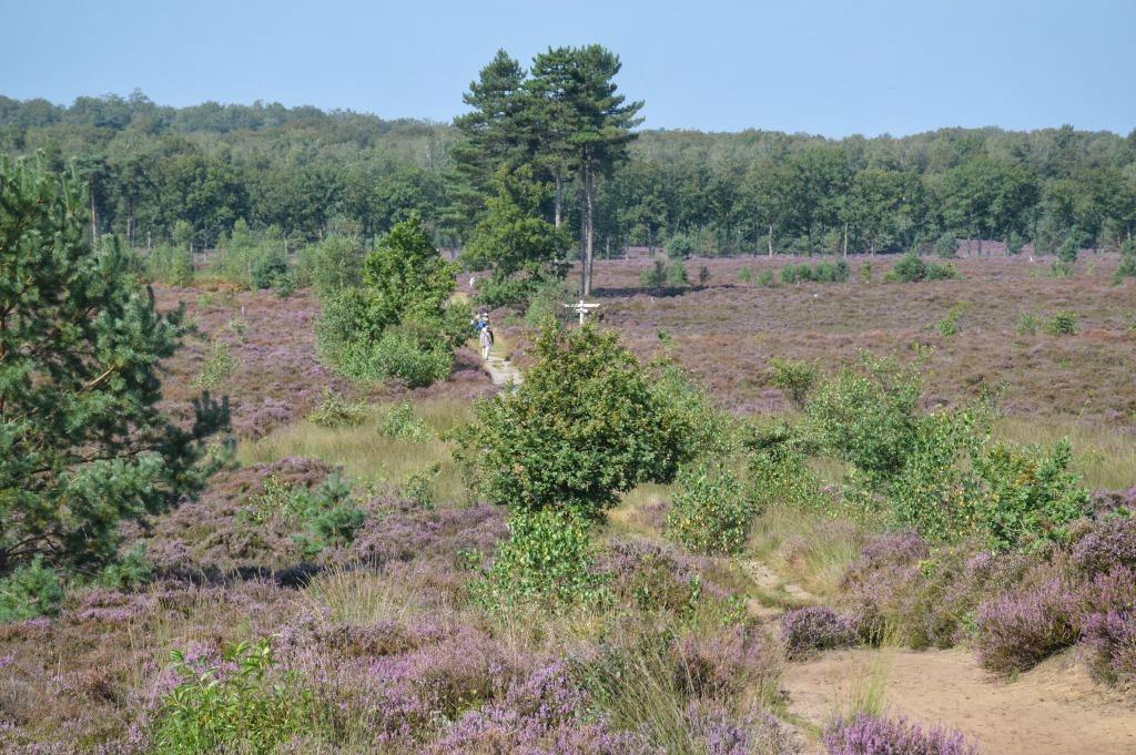 Mooie uitzichtpunten Utrechtse Heuvelrug: Treekerheide Leusden