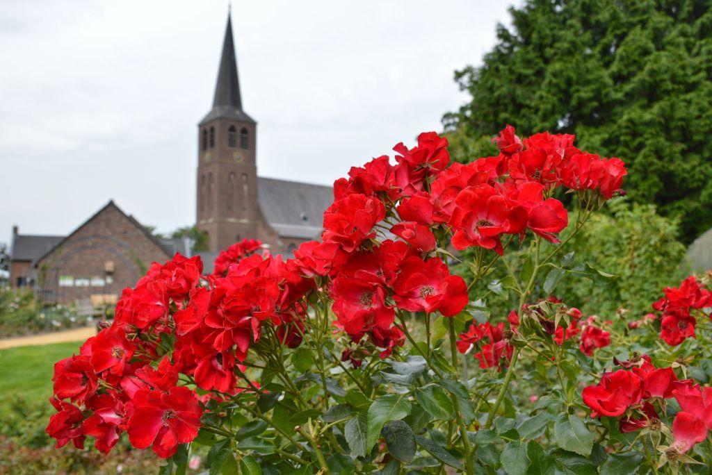 Rozendorp Lottum Limburg